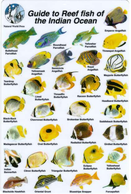 GUIDE TO THE REEF FISH OF THE INDIAN OCEAN