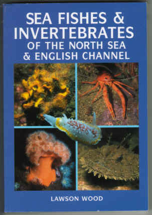 SEA FISHES AND INVERTEBRATES OF THE NORTH SEA AND ENGLISH CHANNEL