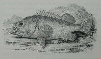 Yarrell Old and antique fish books