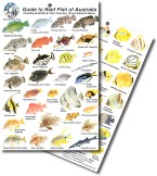 Guide to THE Reef Fish of Australia