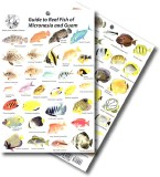 Guide to Reef Fish of Micronesia and Guam