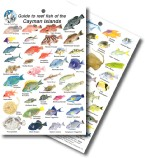 Guide to Reef Fish of the Cayman Islands