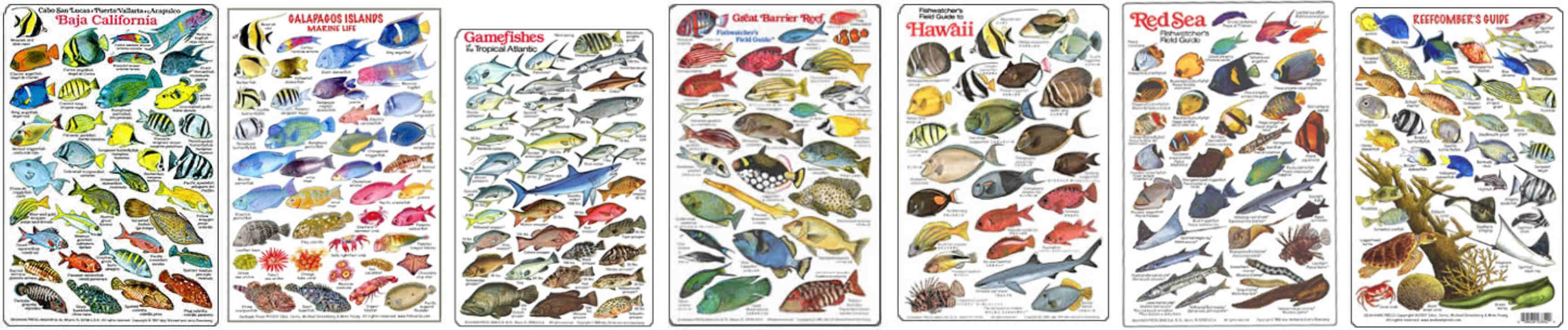 Fish identification dive slates .All areas in stock