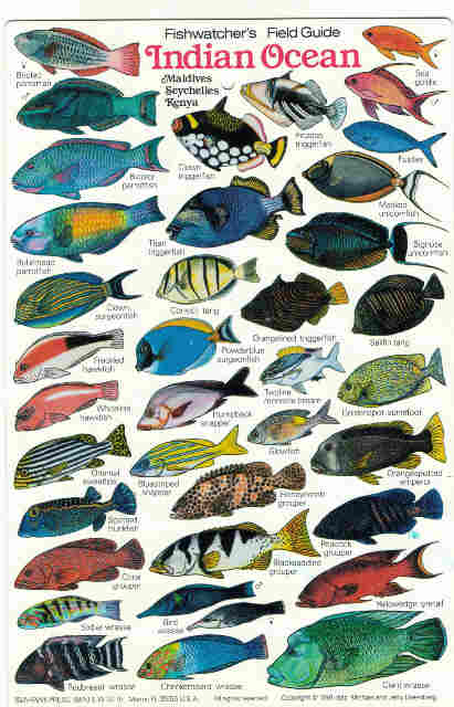 Reef Fish of the Indian Ocean