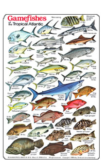 Fish identification guides reef fish identification for Hawaii fish guide
