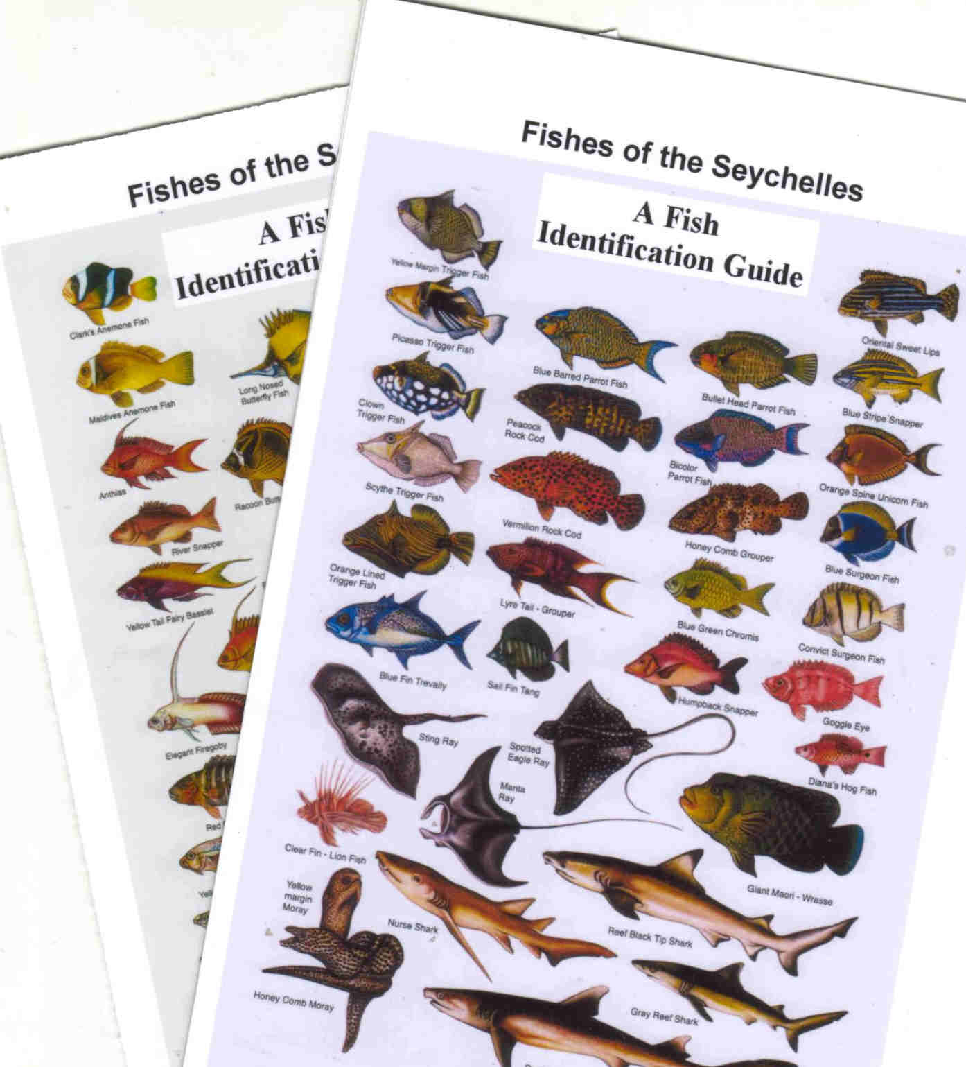 FISHES OF THE SEYCHELLES LAMINATED CARD
