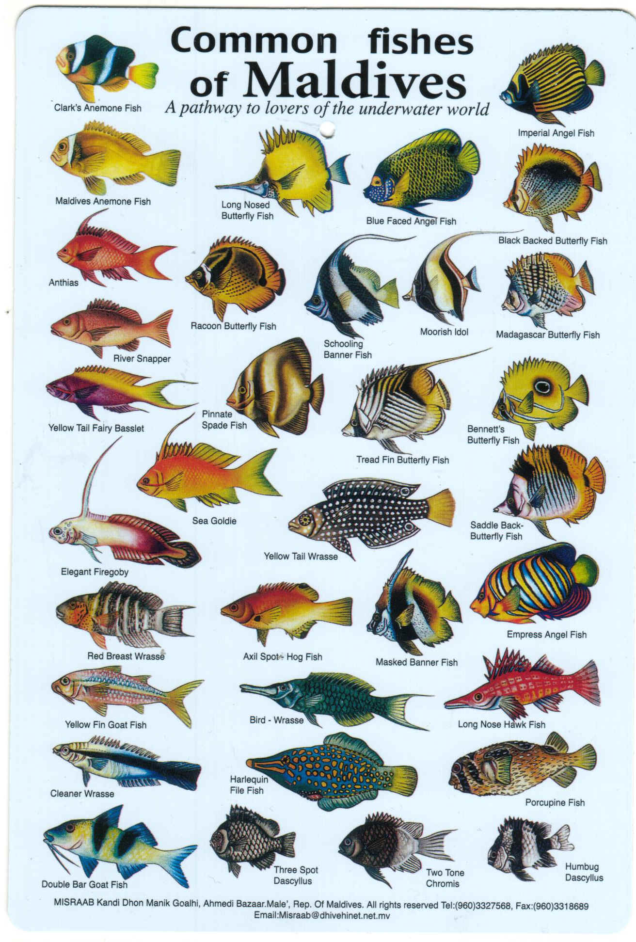 Fishes of the Maldives  Chart