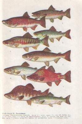 Fishes of Rivers and Lakes of the USSR. Soviet Reference Book (1977) In Russian