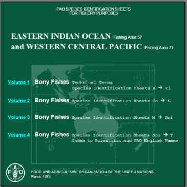 Eastern Indian Ocean and Western Central Pacific. Fish Identification Sheets.
