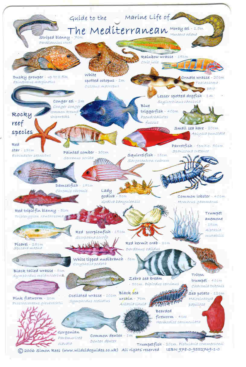 Guide to Mediterranean sea  Fish, fishes  AND SEALIFE